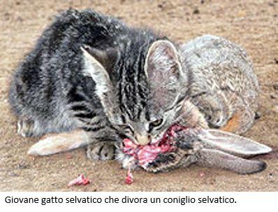 Lofficina Dellambiente Animali Selvatici E Inselvatichiti In