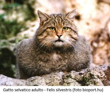Lofficina Dellambiente Animali Selvatici E Inselvatichiti In